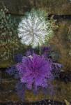 Small Purple and White Plants at the San Antonio Botanical Garden