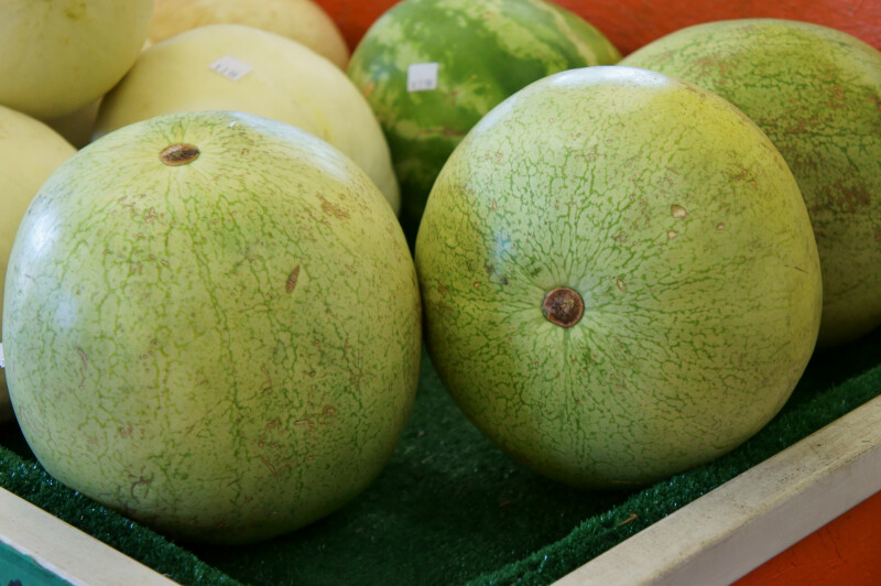 Small, Seedless Watermelons at the Tampa Bay Farmers Market