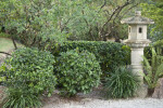 Small Shrubs and Stone Sculpture