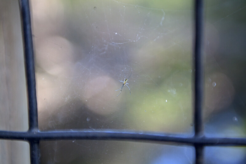Small Spider Resting in its Web Between Iron Bars
