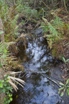 Small Stream at Lake June-in-Winter Scrub State Park