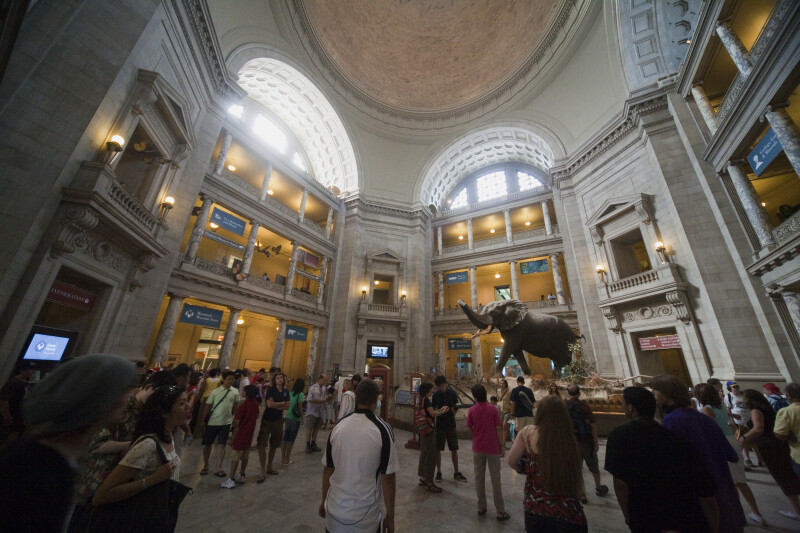 Smithsonian Museum of Natural History Rotunda