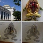 Smithsonian Museum of Natural History photographs