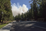 Smoke Rising over the Trees