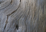 Smooth, Dead Wood with a Knothole