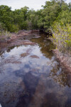 Snake Bight Creek