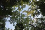 Snake Bight Trail Canopy