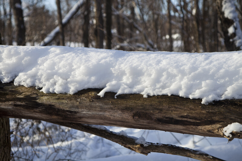 Snow-covered Log