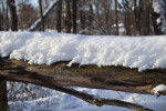 Snow-covered Log