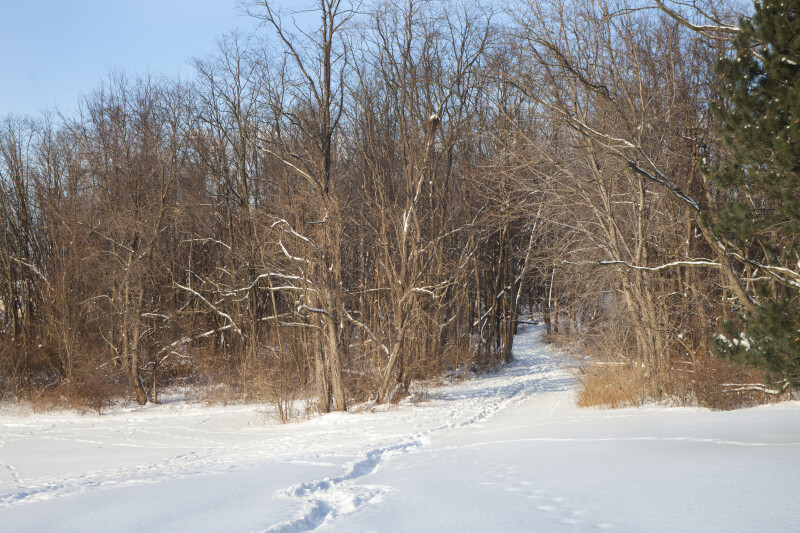 Snow-covered Path in the Park