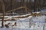 Snow on Fallen Tree