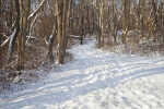 Snowy Path Through the Woods