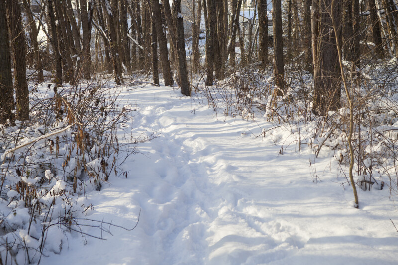 Snowy Trail Through Woods