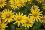 """Sonora"" Flowers"