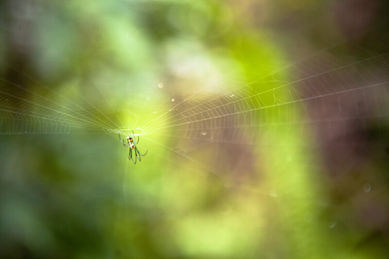 Spider in the Center of its Web Along the Gumbo Limbo Trail