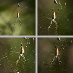 Spiders photographs