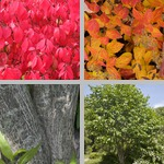 Spindle Trees photographs