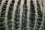 Spines of a Cactus
