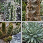 Spines, Thorns, & Prickles photographs