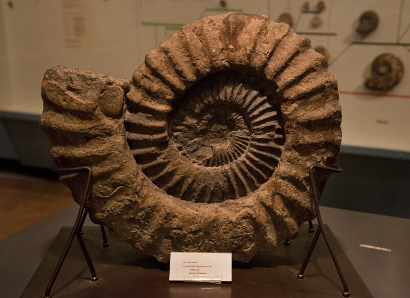 Spiral-Shaped Shell