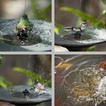 Splashing photographs