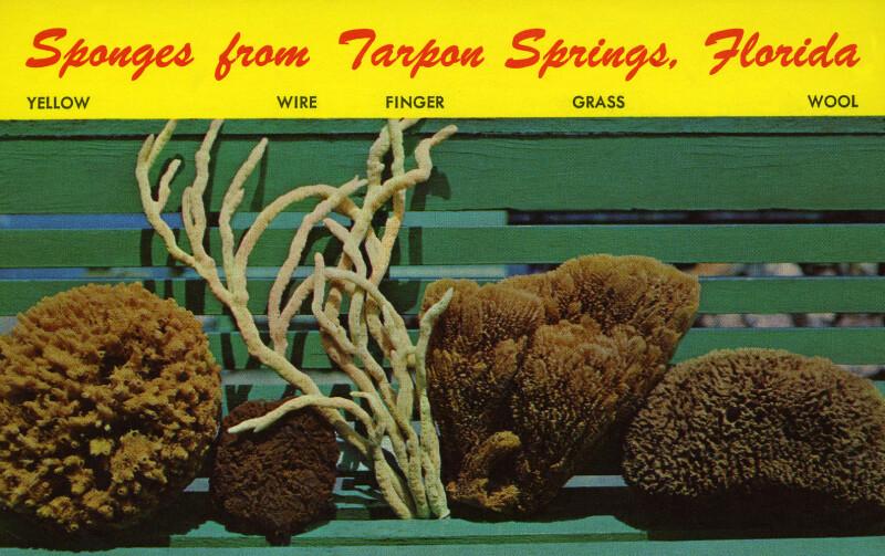 Sponges from Tarpon Springs, Florida