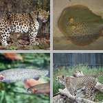 Spots photographs