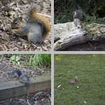 Squirrels photographs