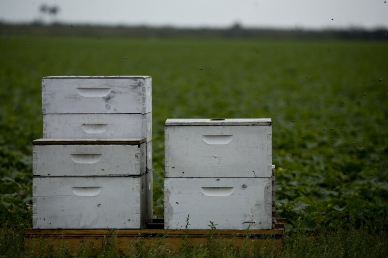 Stacks of Bee Boxes