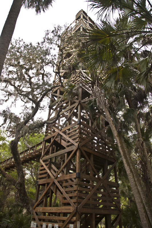 Stairway Leading to Skywalk at Myakka River State Park