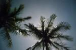 Stars and Palms