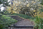 Steps and Branching Trees
