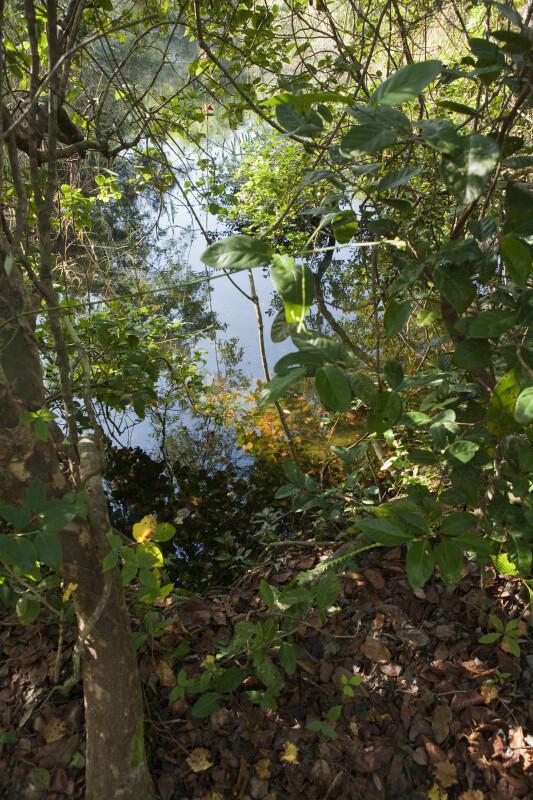 Still Water Beyond Tress and Shrubs