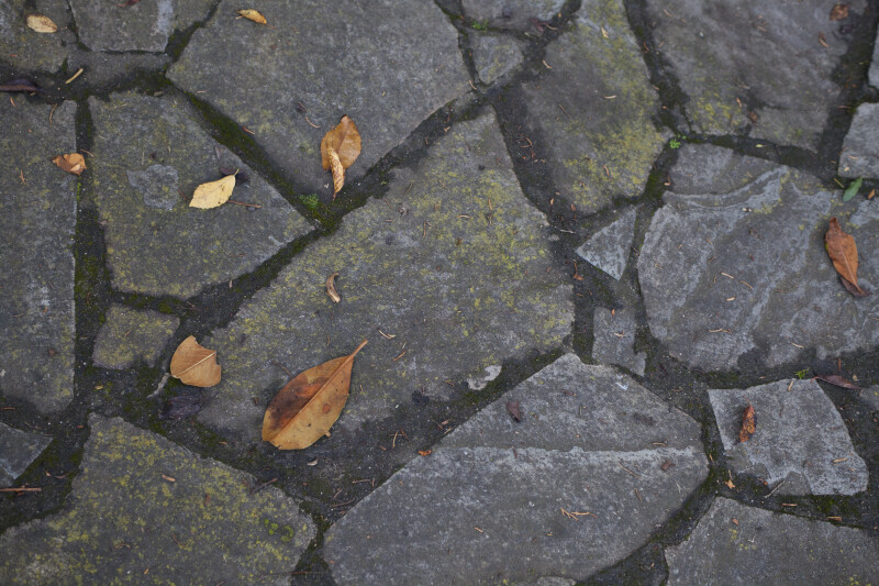 Stone Pavement with Leaves and Moss