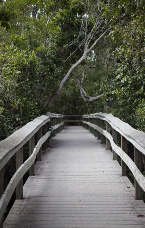 Straight Boardwalk Path at Mahogany Hammock of Everglades National Park