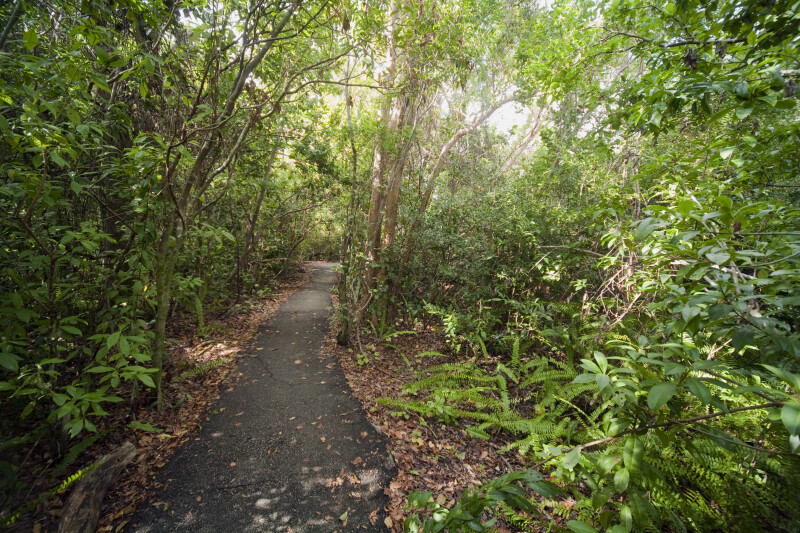 Straight Path Along Gumbo Limbo Trail at Everglades National Park