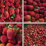 Strawberries photographs