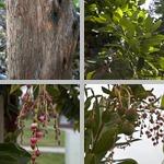 Strawberry Trees photographs