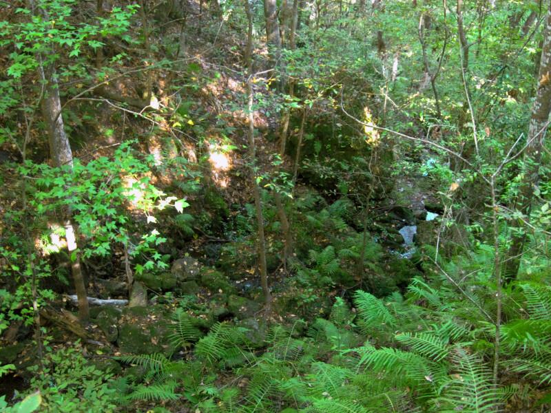 Stream at Devil's Millhopper