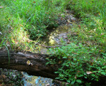 Stream Through Grass