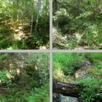 Streams photographs