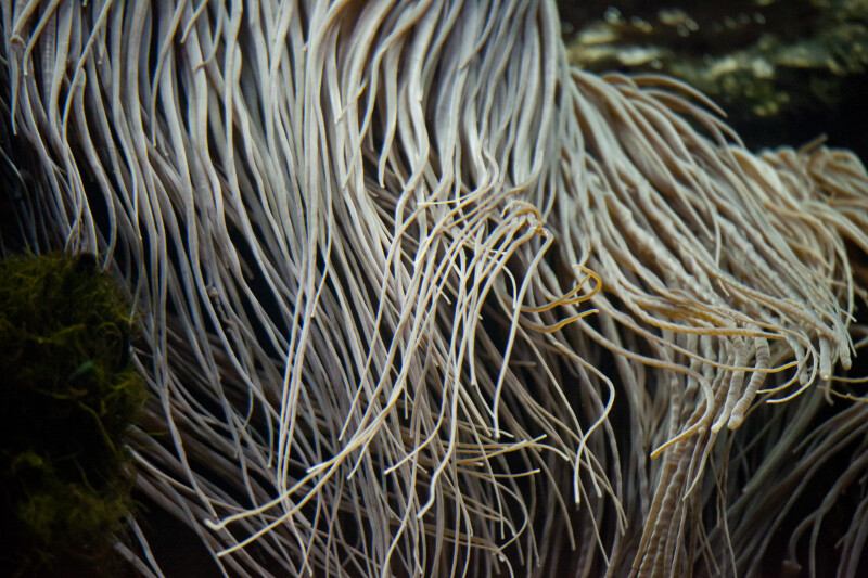 Stringy Tentacles Close-Up
