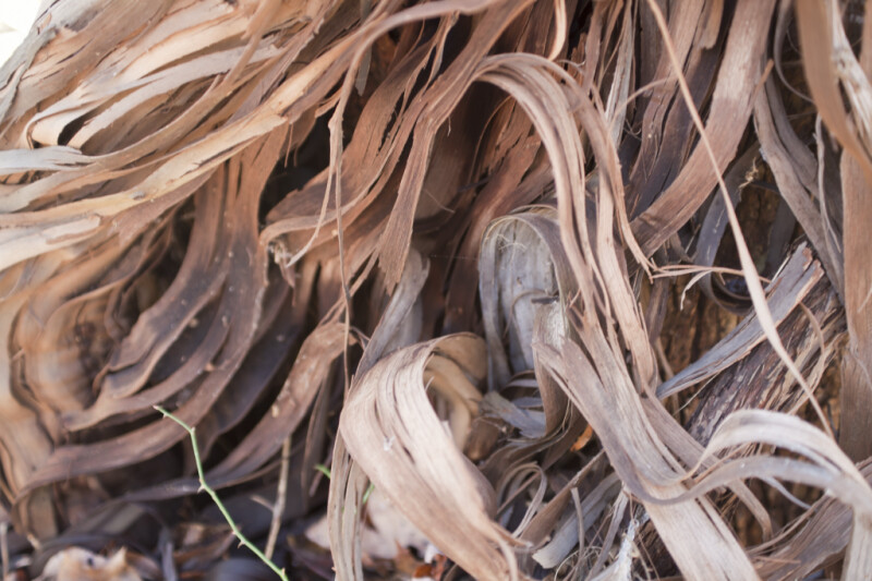 Stringy Vine Bark Close-Up