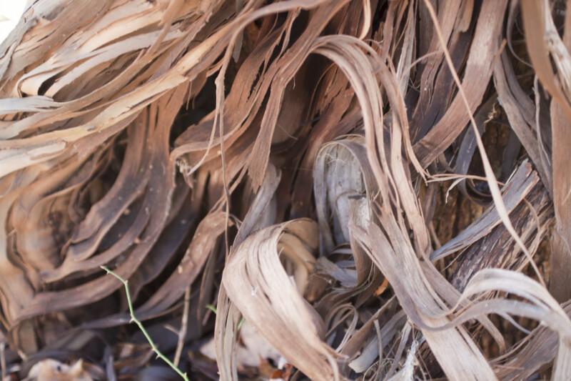Stringy Vine Bark Close-Up