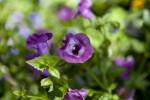 Summerwave Flowers