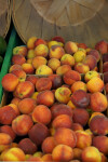 Sun Blush Peaches
