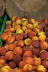 Sun Blush Peaches
