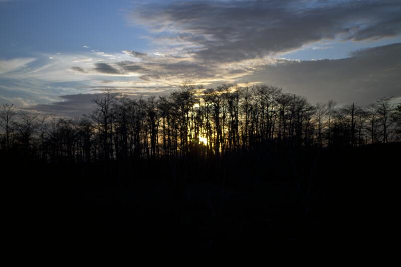 Sun Setting Behind Several Cypress Trees