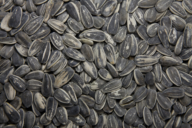 Sunflower Seeds Close-Up