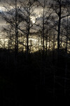 Sunset at Dwarf Cypress Forest